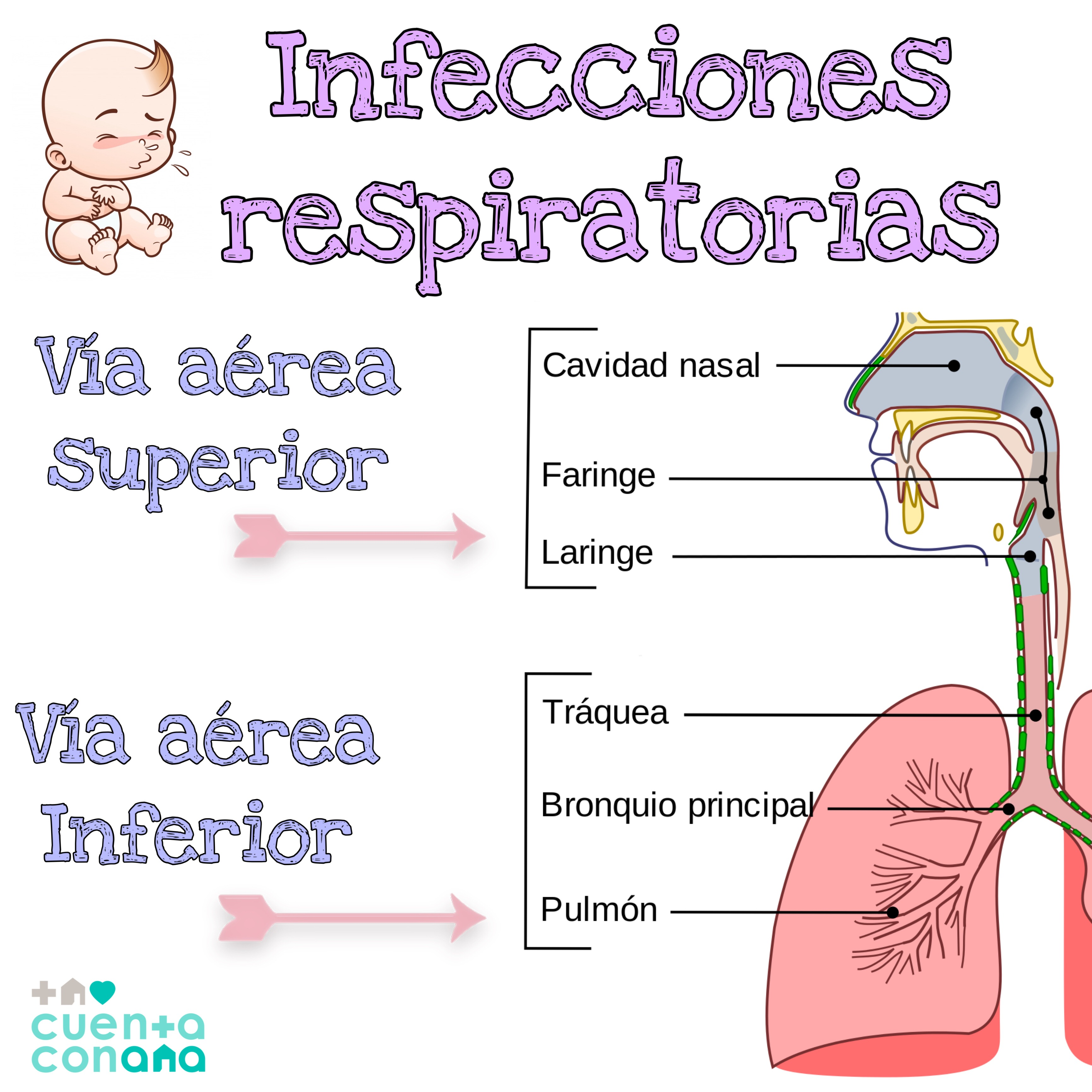 que+son+las+infecciones+de+vias+respiratorias+bajas